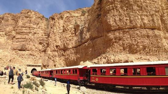 Lézard rouge sud Tunisie
